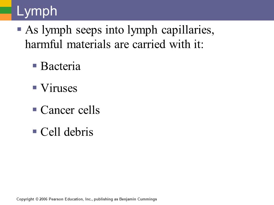 Lymph As lymph seeps into lymph capillaries, harmful materials are carried with it: Bacteria. Viruses.