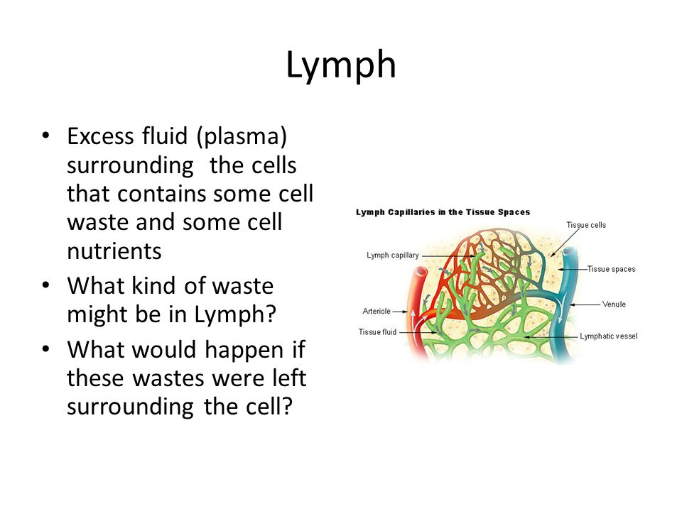 Lymph Excess fluid (plasma) surrounding the cells that contains some cell waste and some cell nutrients.