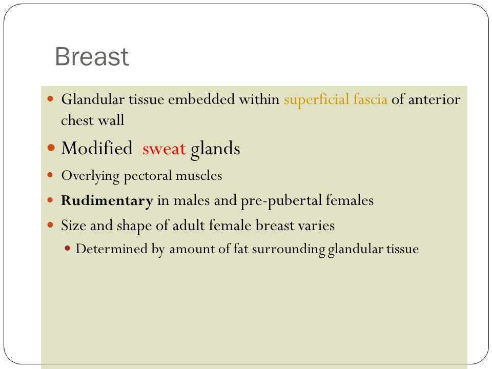 Breast Modified sweat glands