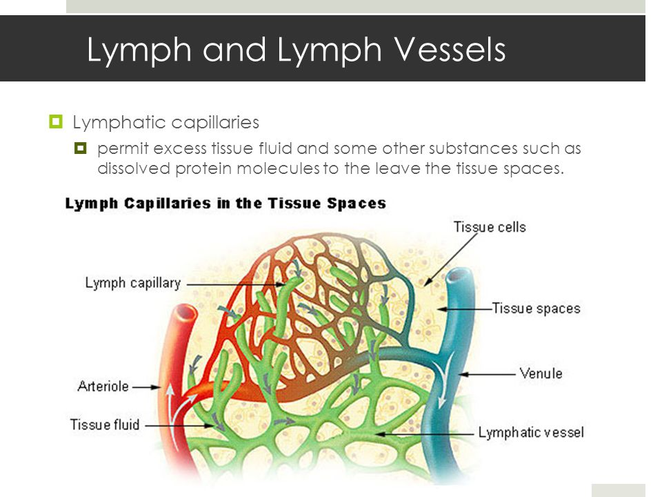 Lymph and Lymph Vessels