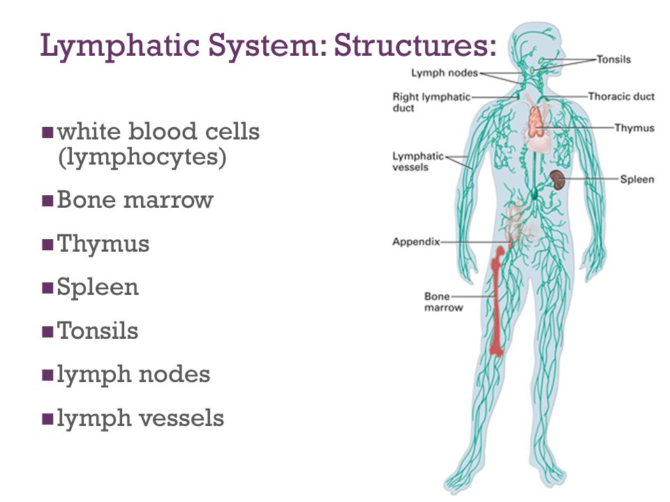 The Lymphatic Immune System Ppt Download