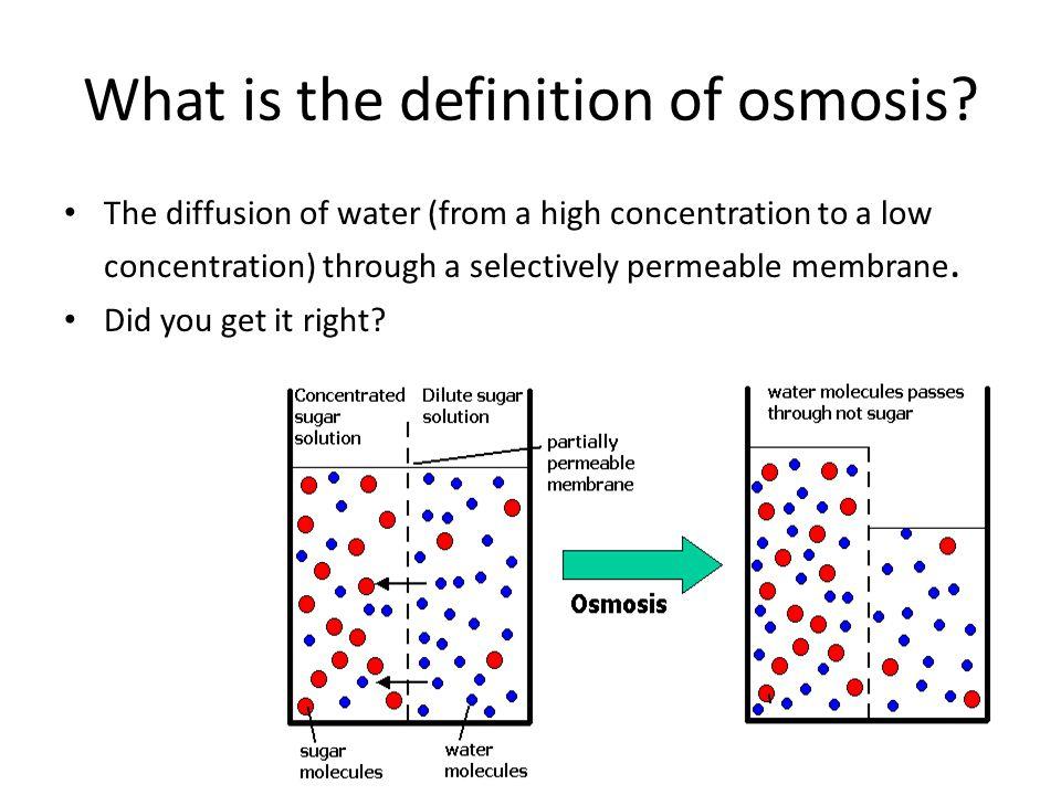 Osmosis Definition Osmosis Jones. ...