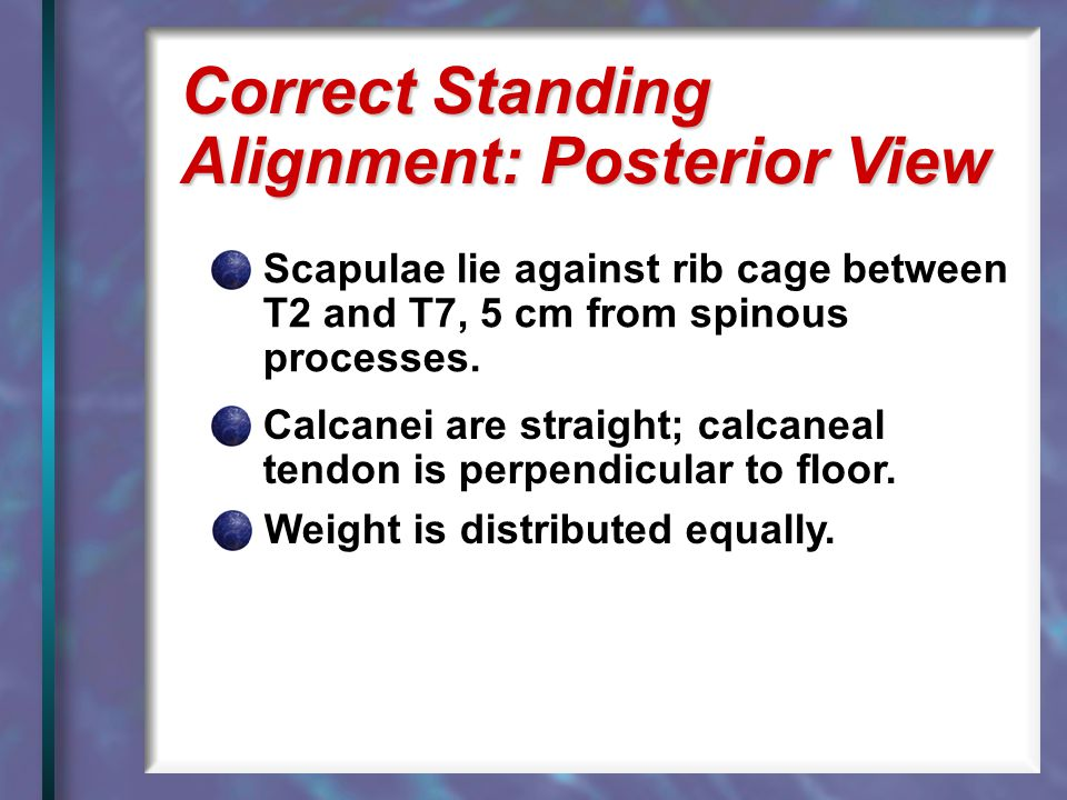 Correct Standing Alignment: Posterior View