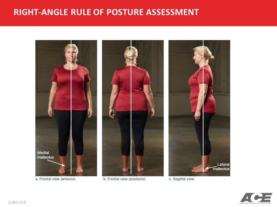 Right Angle Body : Ace personal trainer manual th edition ppt video online