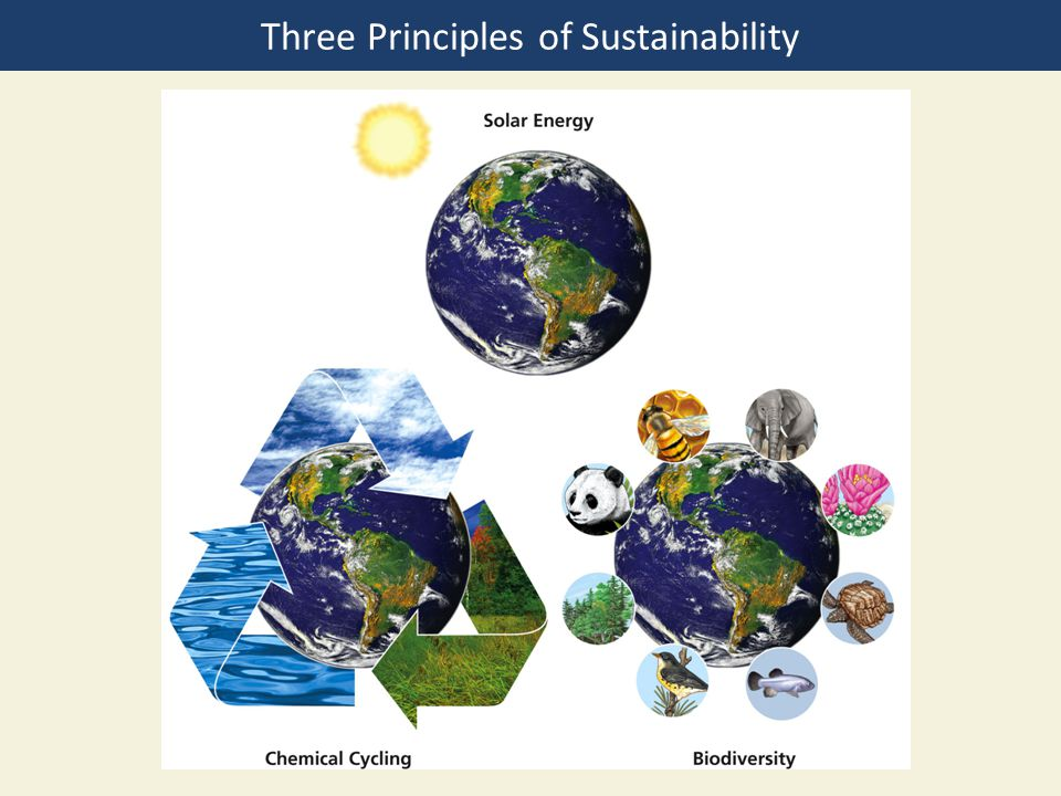 Three Principles of Sustainability