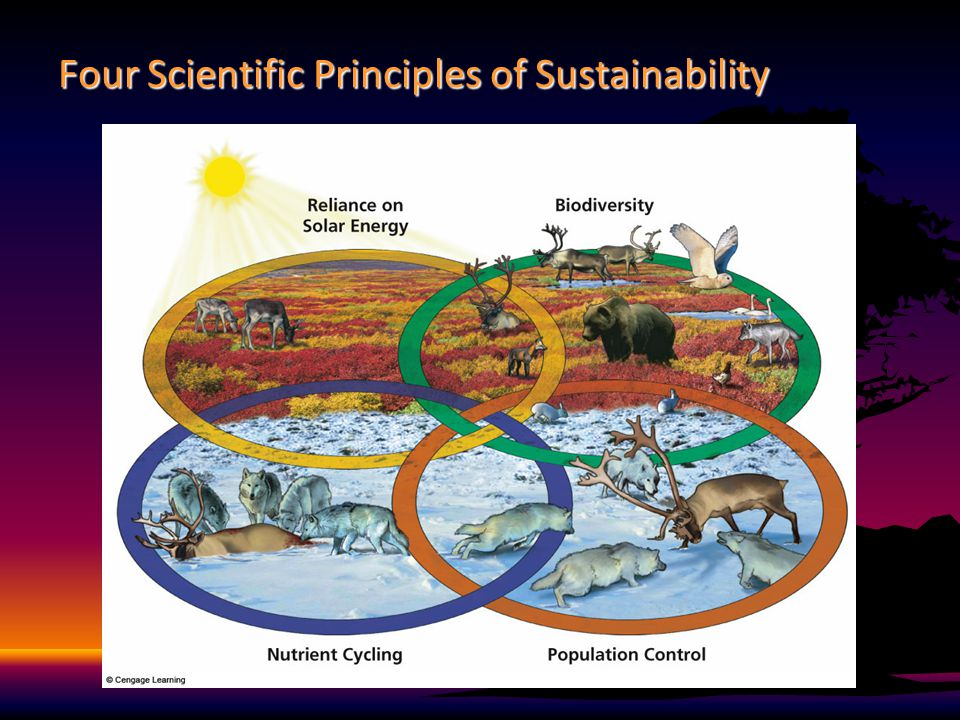 environmental problem causes and sustainability environmental sciences essay By reframing the problem, opponents of environmental reform  why is protecting the environment so difficult  environmental problems and american politics:.