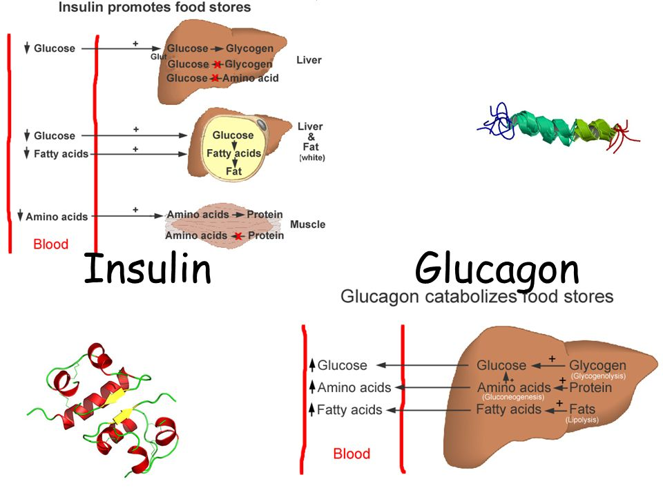Insulin Glucagon