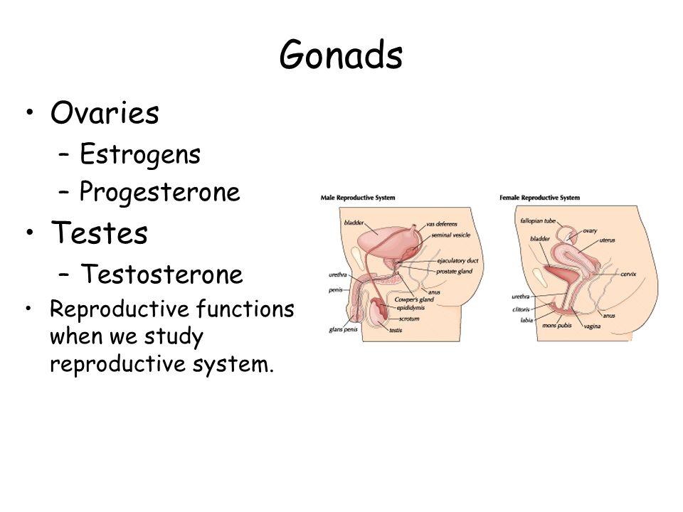 Gonads Ovaries Testes Estrogens Progesterone Testosterone