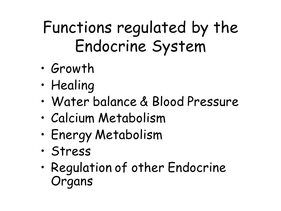 Functions regulated by the Endocrine System