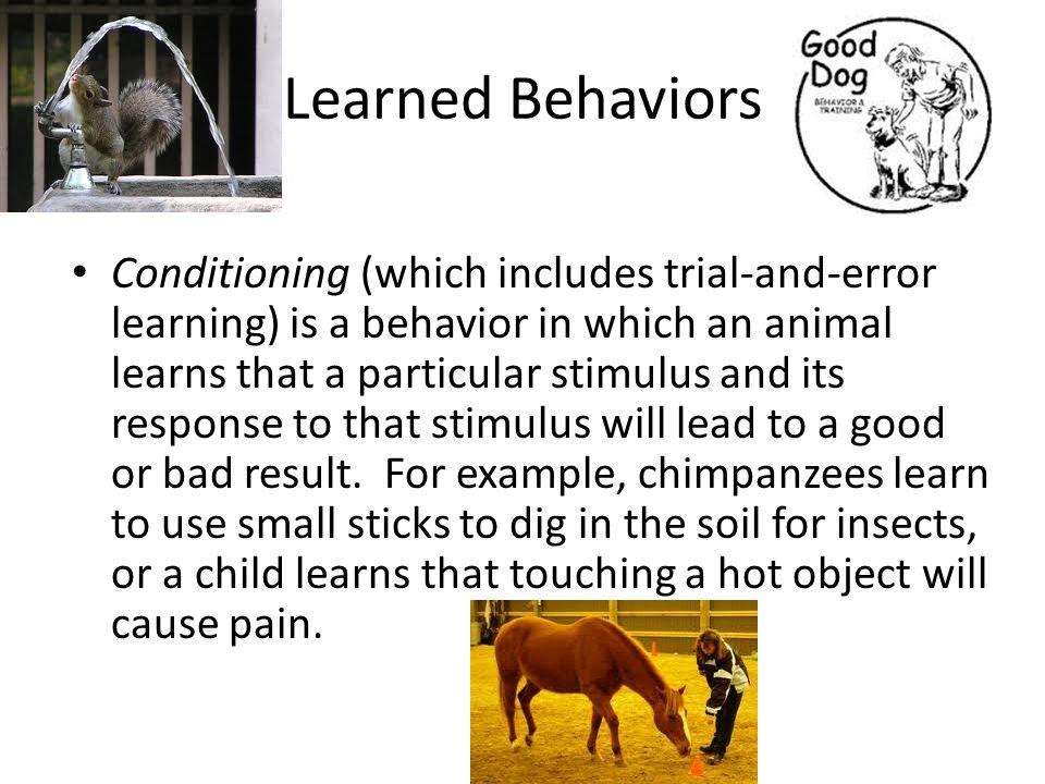 Internal Stimuli Learned Inherited Behaviors Ppt Video Online