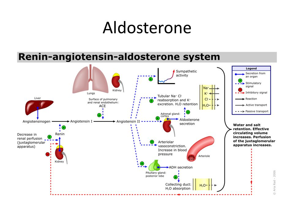 Aldosterone Hormone Pictures to Pin on Pinterest