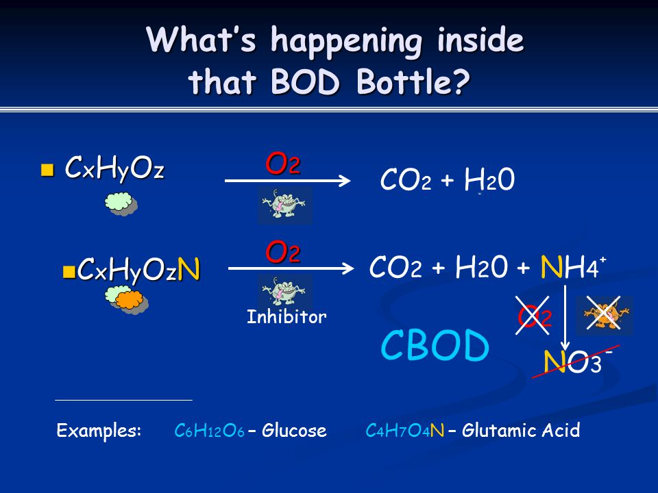 What's happening inside that BOD Bottle