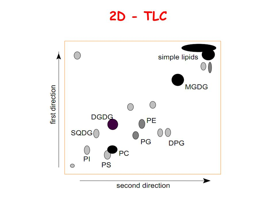 Thin Layer Chromatography Of Lipids Ppt Video Online