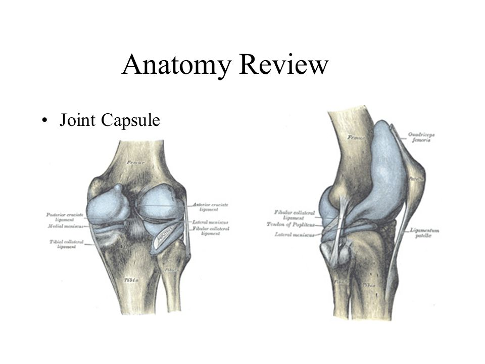anatomy of knee joint pdf