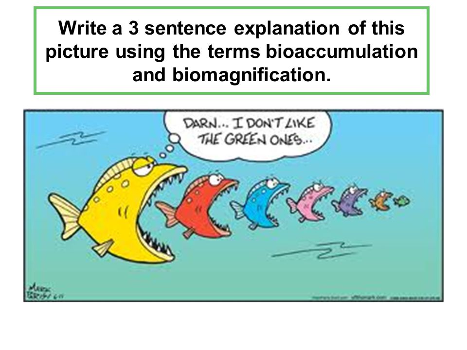 how to write a sentence fish