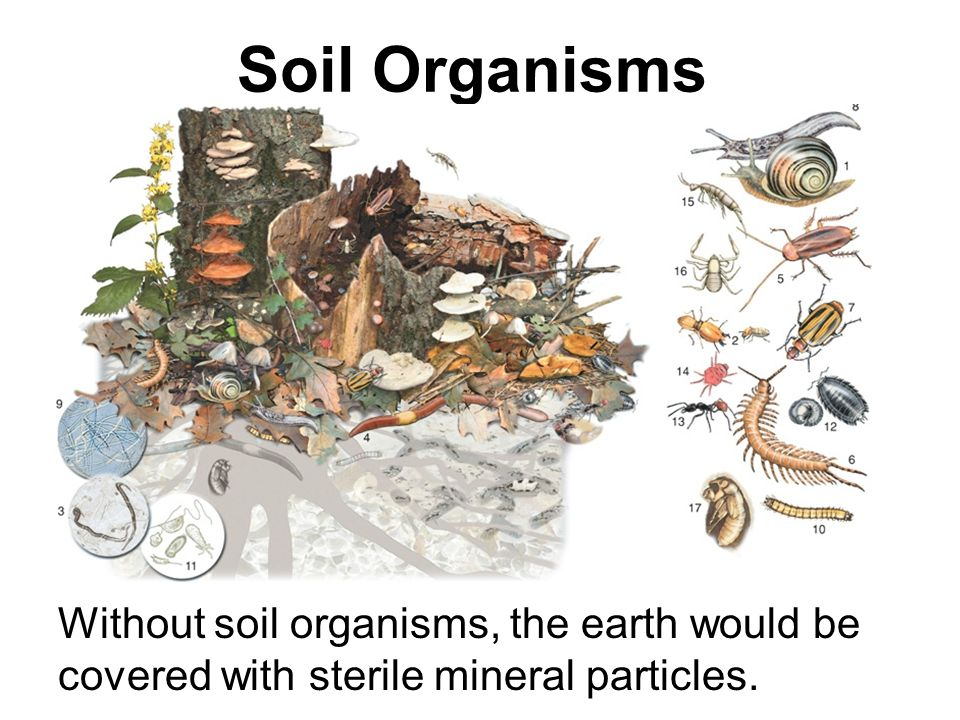 Chapter 7 food and agriculture ppt download for Things made up of soil