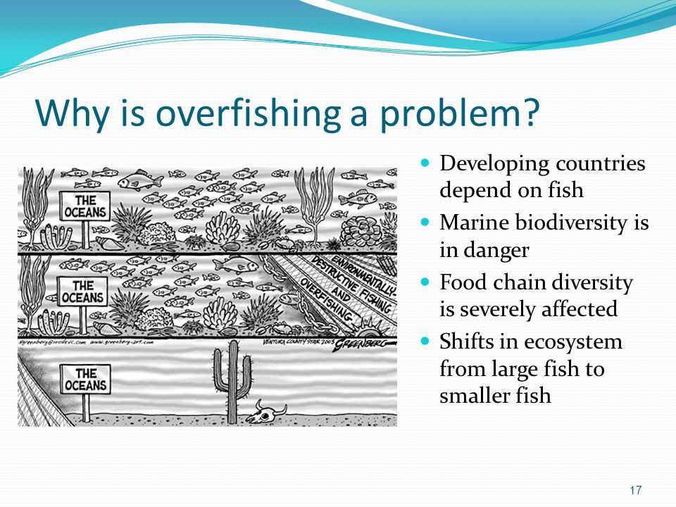 overfishing fish and marine ecosystem Fish are a vital ecological, economic, and food resource, but many species are in  decline because of habitat loss, pollution, over fishing, and bycatch1 fisheries.