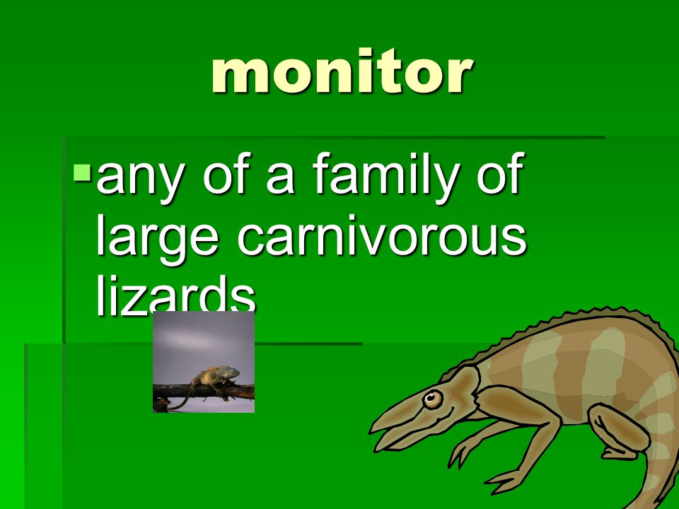 monitor any of a family of large carnivorous lizards