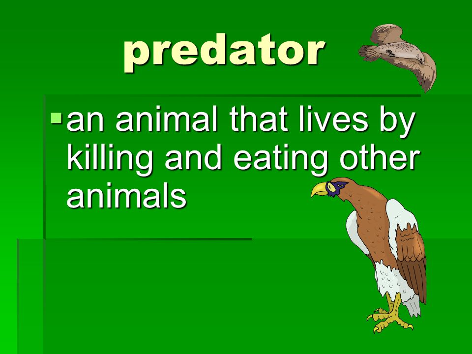 predator an animal that lives by killing and eating other animals