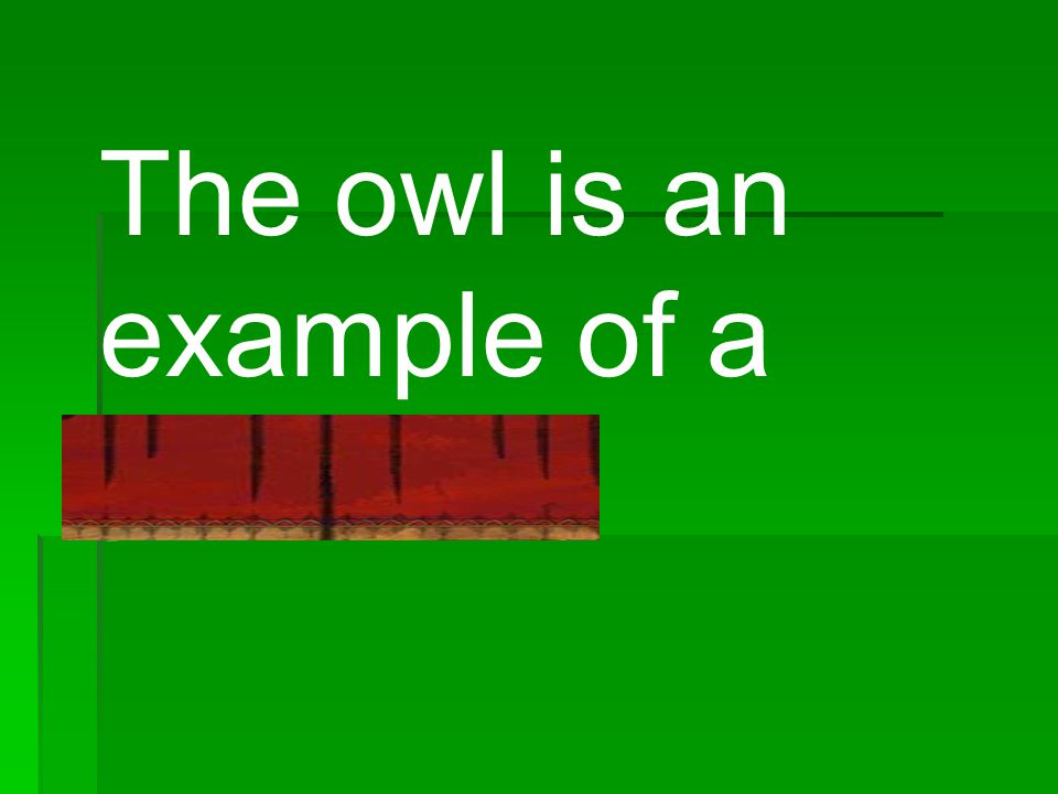 The owl is an example of a predator.