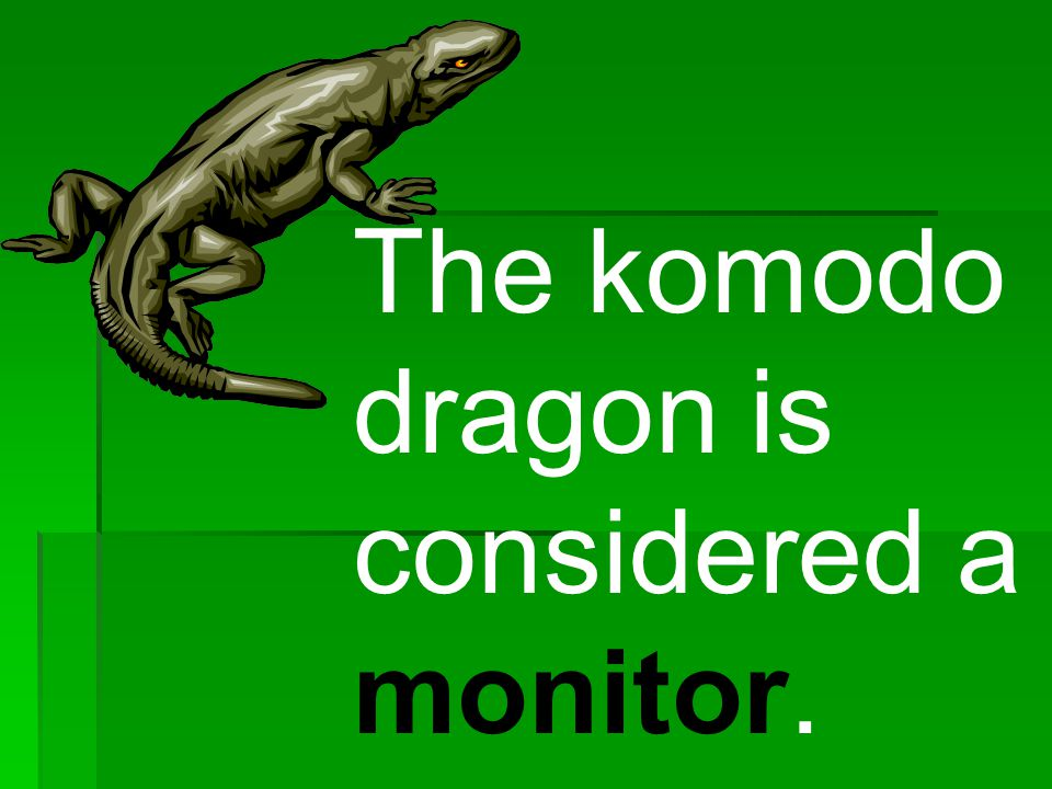 The komodo dragon is considered a monitor.