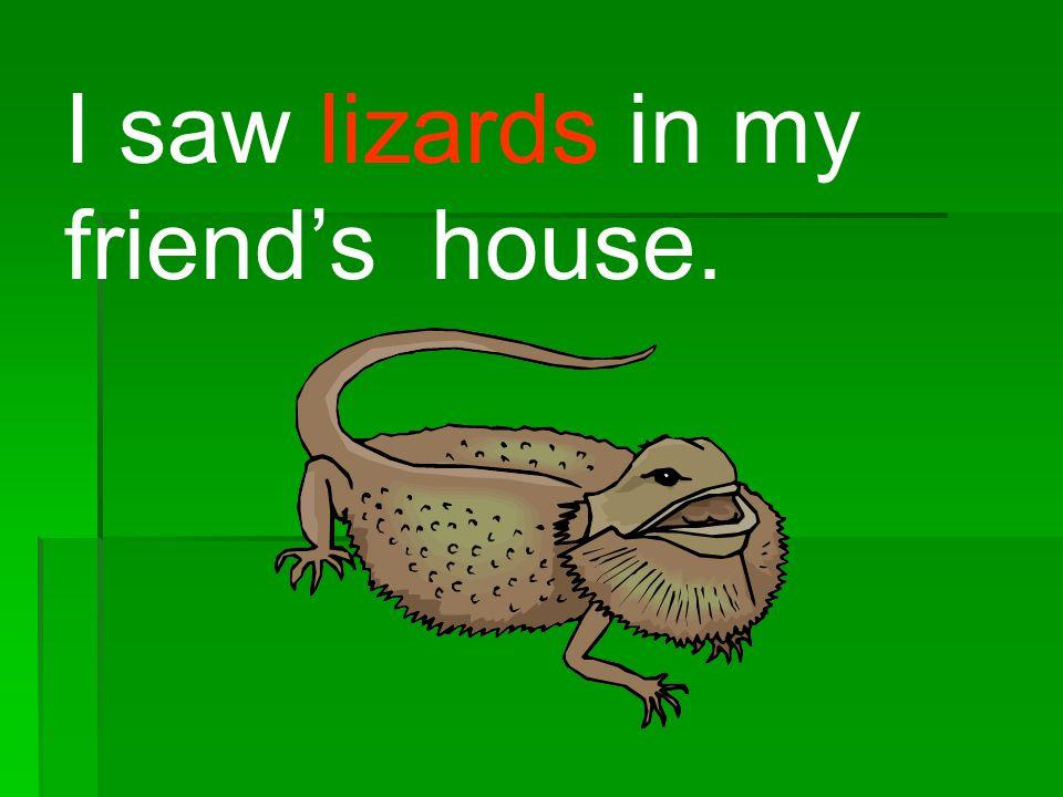 I saw lizards in my friend's house.