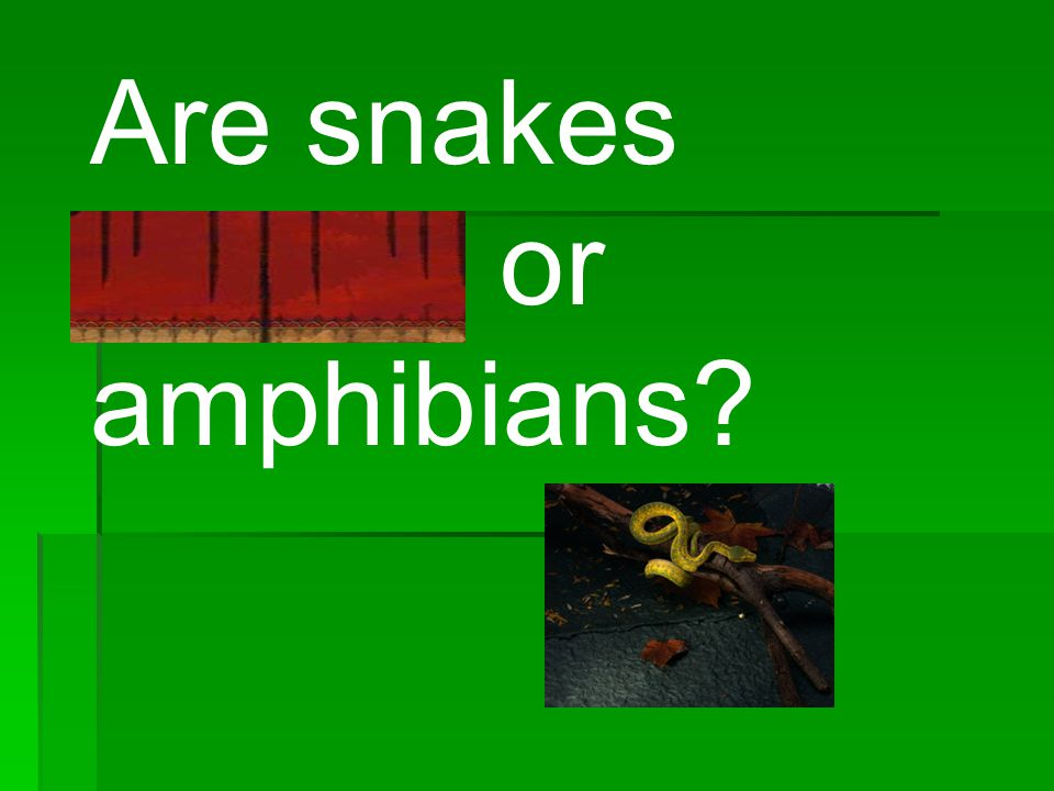 Are snakes reptiles or amphibians