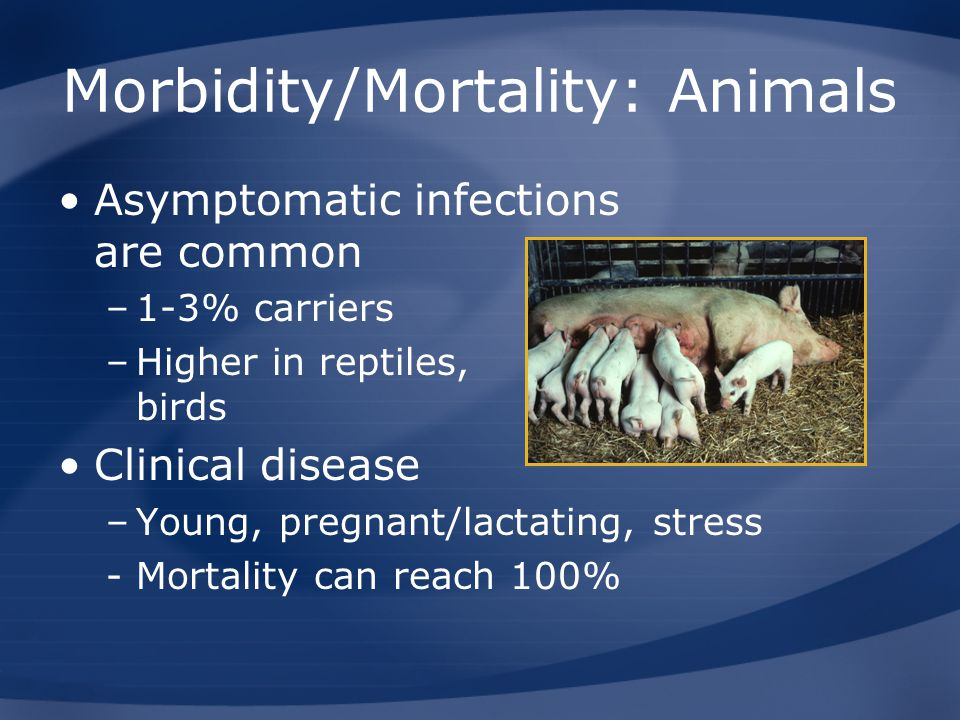Morbidity/Mortality: Animals