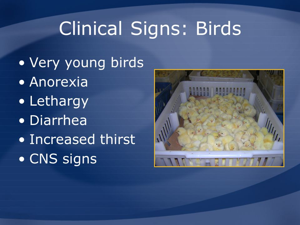 Clinical Signs: Birds Very young birds Anorexia Lethargy Diarrhea
