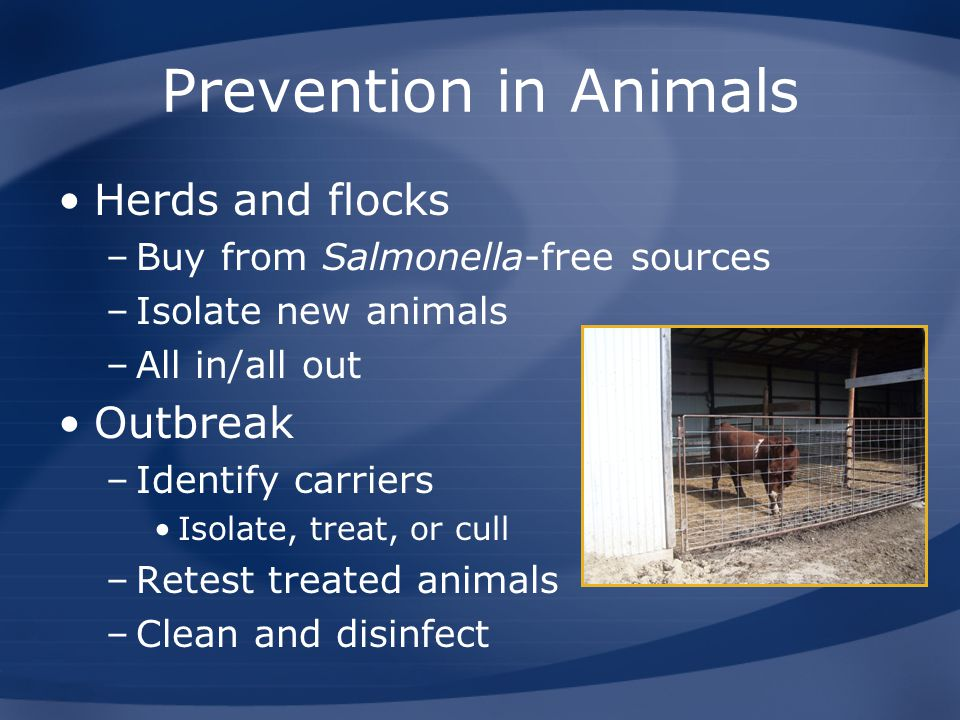 Prevention in Animals Herds and flocks Outbreak