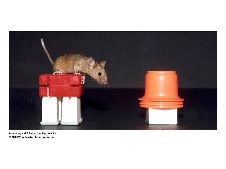 FIGURE 6.31 Doogie Mice