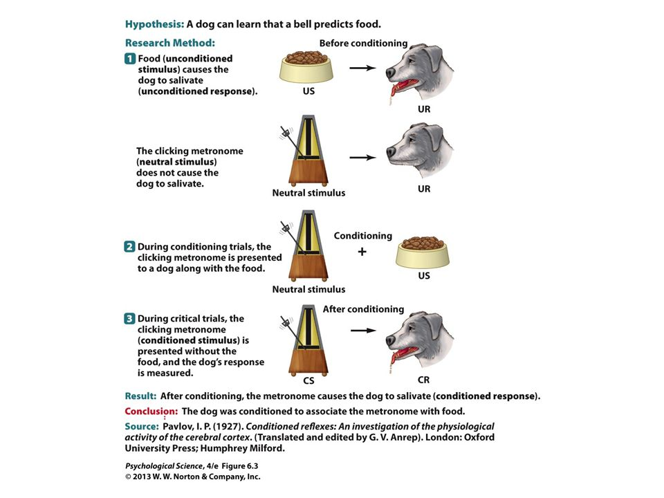 FIGURE 6.3 Scientific Method: Pavlov's Classical Conditioning