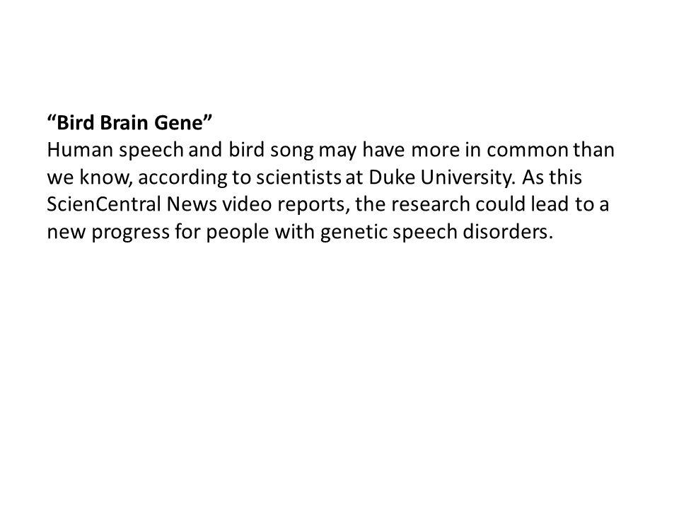 Bird Brain Gene