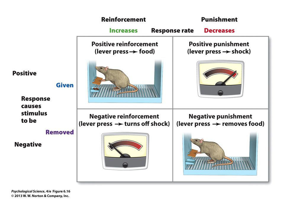 FIGURE 6.16 Negative and Positive Reinforcement, Negative and Positive Punishment