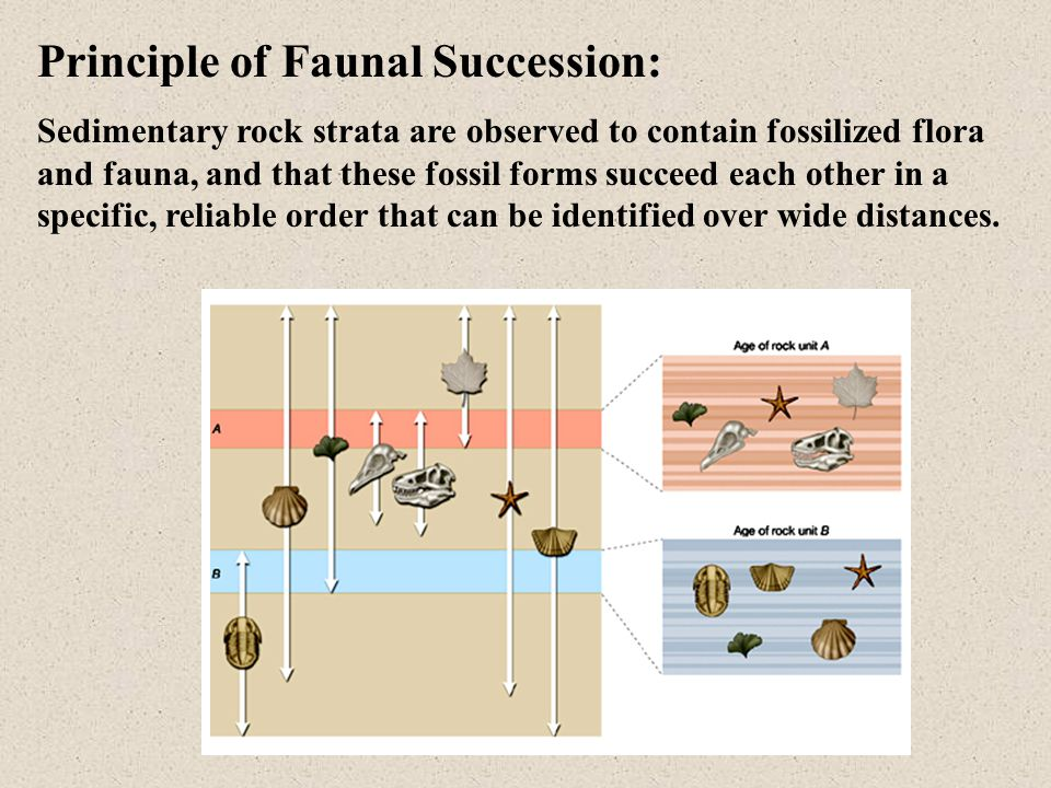 What Is the Principle of Fossil Succession?