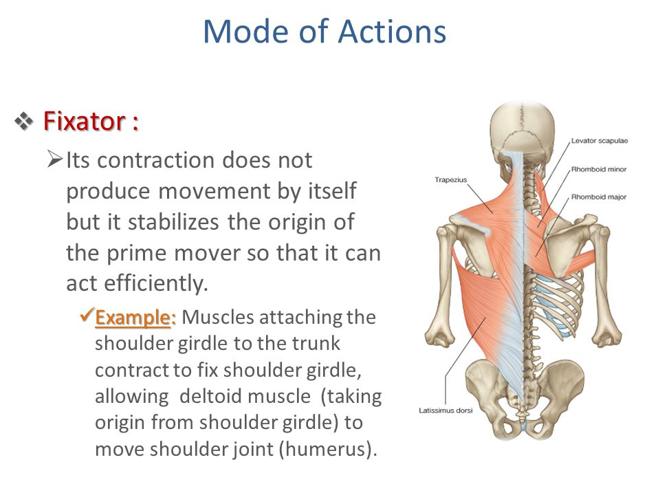 Mode of Actions Fixator :