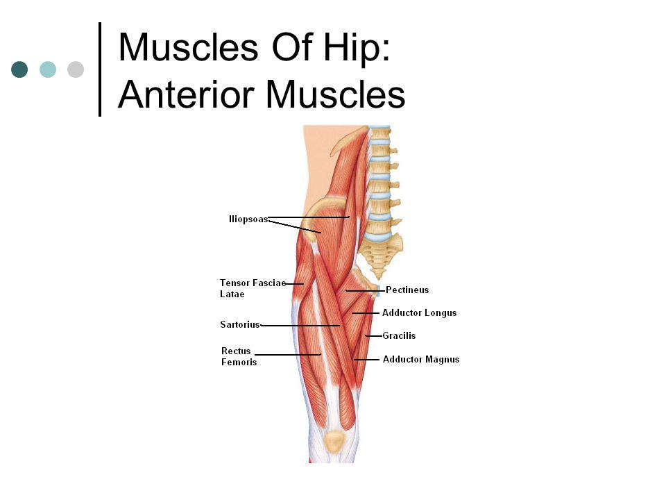 Naming Skeletal Muscles - ppt video online download