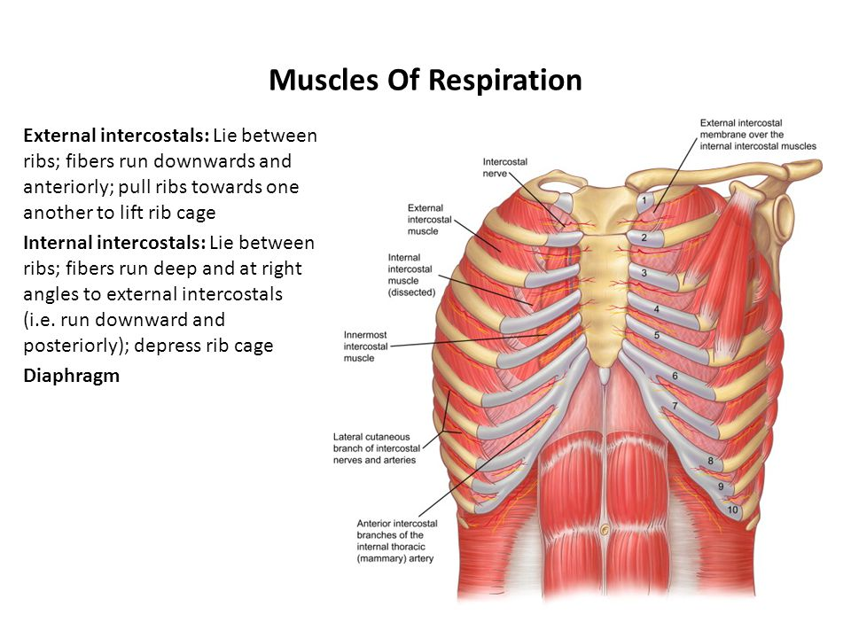Naming Skeletal Muscles Ppt Video Online Download