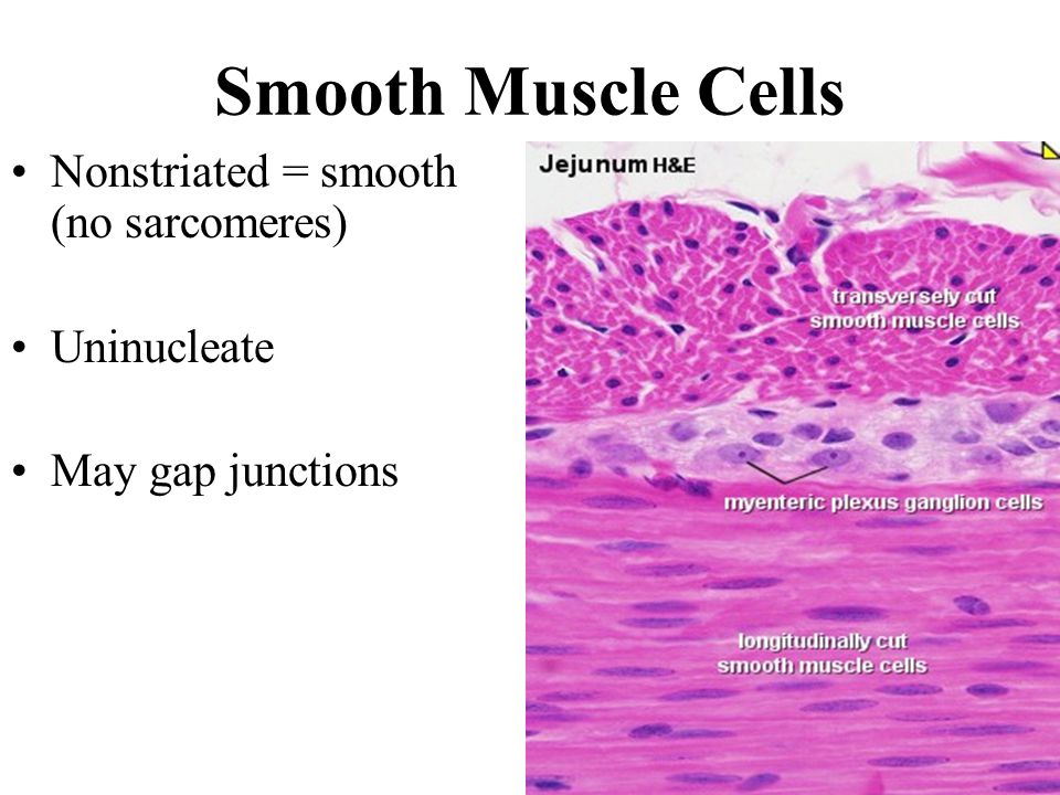 muscles and muscle tissue - ppt download, Cephalic Vein