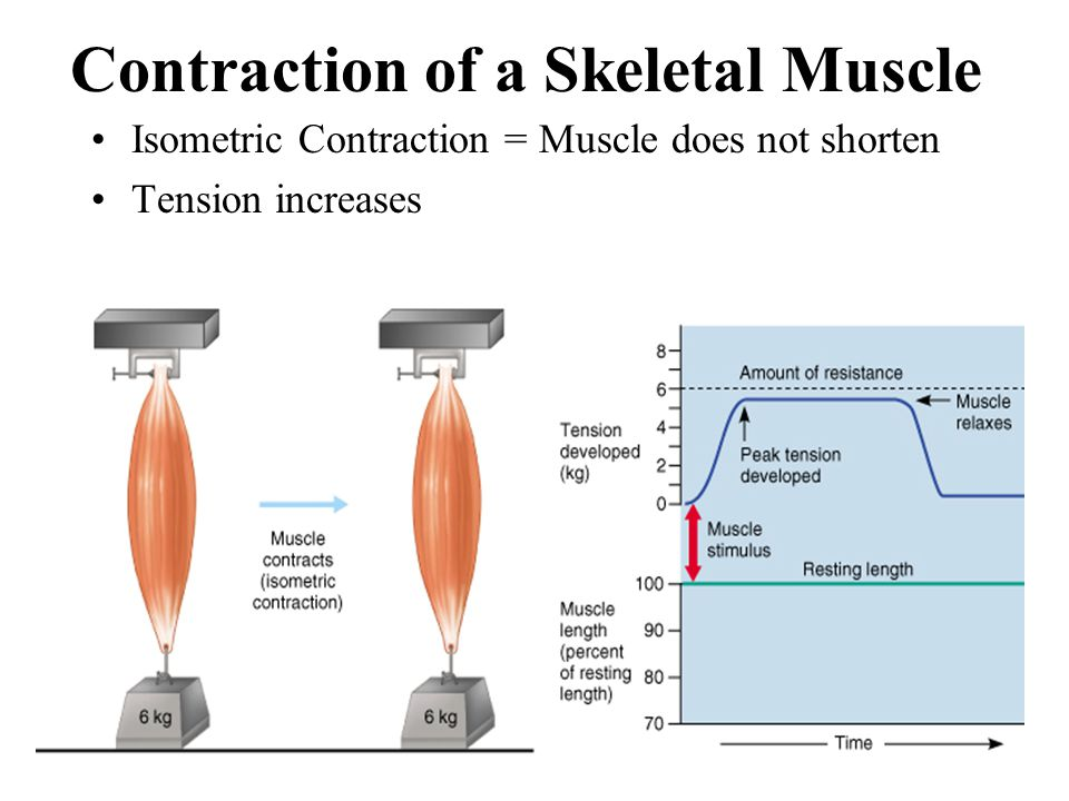 excercise 2 skeletal muscle physiology post lab quiz Exercise 2: skeletal muscle physiology: physioex 90 exercise 7 pre and post quizzes activity 2 essay endocrinology, physioex , etc physioex exercise 2 lab.
