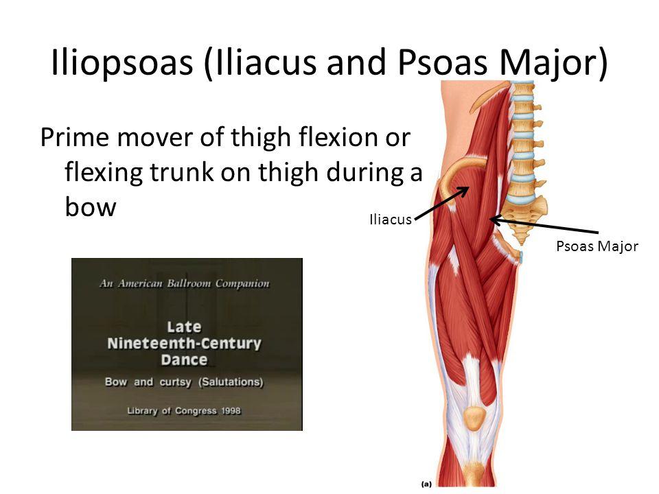 Psoas Major Muscle Wikipedia 8016832 Laana Pengarfo