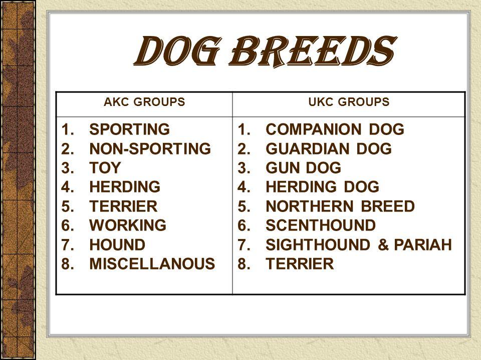 Dog Breeds Ppt Video Online Download