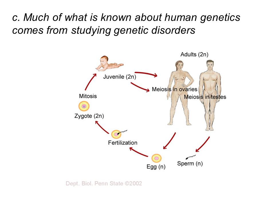 Chapter 14 The Human Genome ppt video online download – Human Genetic Disorders Worksheet