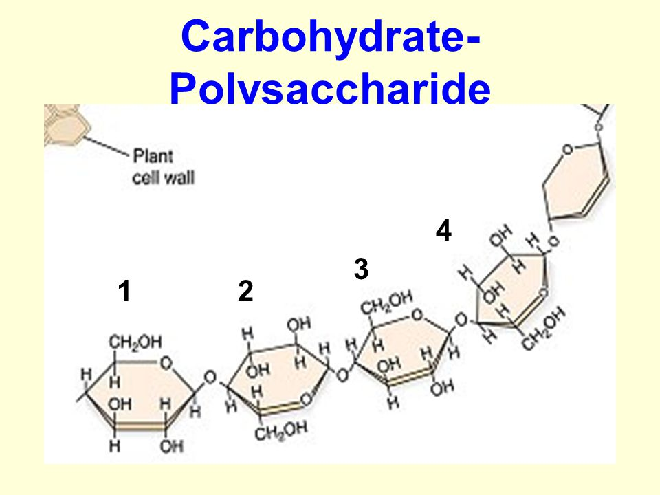 Carbohydrate- Polysaccharide