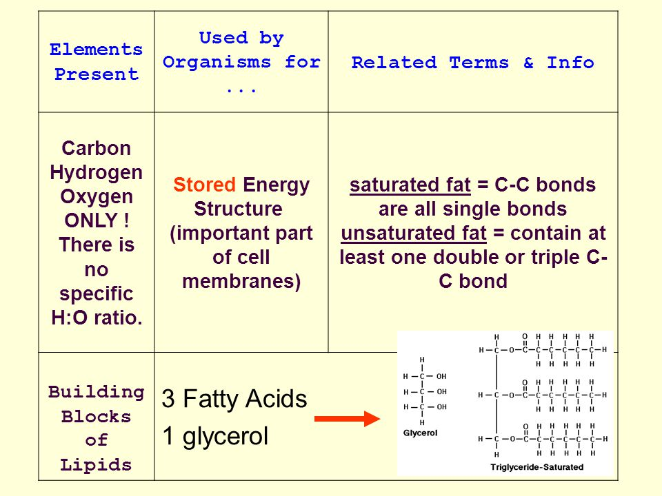 3 Fatty Acids 1 glycerol Elements Present Used by Organisms for ...