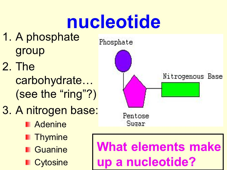 nucleotide What elements make up a nucleotide A phosphate group