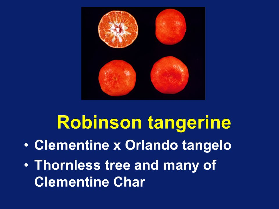 how to play tangerine intro