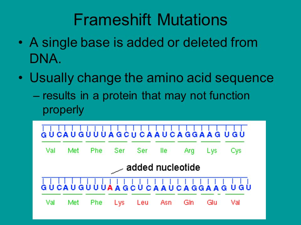 Frameshift Mutations A single base is added or deleted from DNA.
