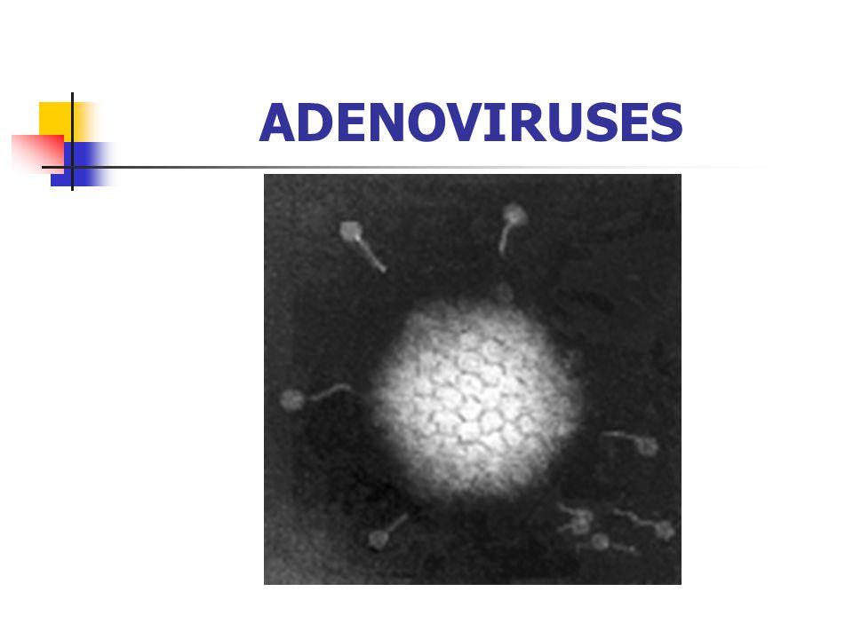 ADENOVIRUSES