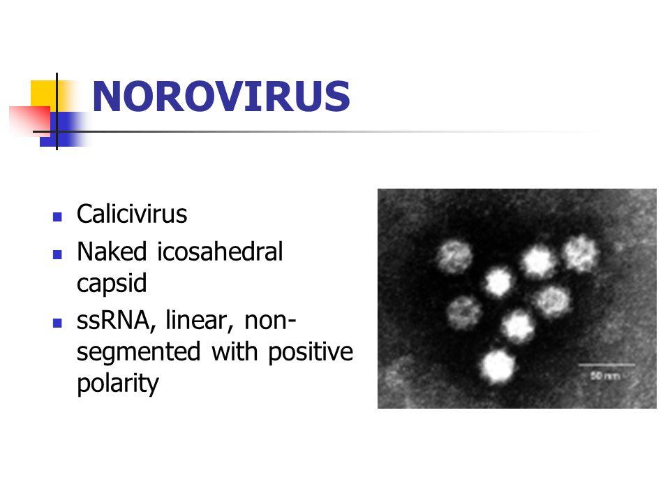 NOROVIRUS Calicivirus Naked icosahedral capsid